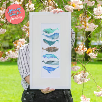 'Pod' Illustrated Whale Print by James Cluer